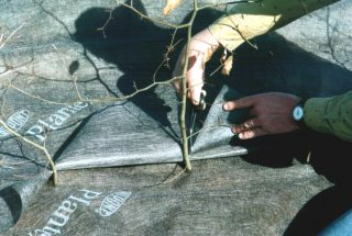 Plantex hedge fabric