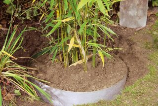 Plantex root barrier